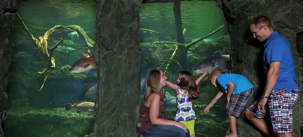 A family enjoys one of many aquariums at Bass Pro Shops in Springfield, Missouri.